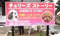 仔犬販売専門店 チェリーズストーリー様